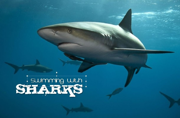 swimming-with-sharks-gallery